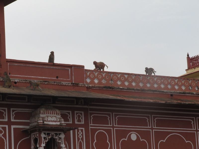 Jaipur_City_palace5.jpg