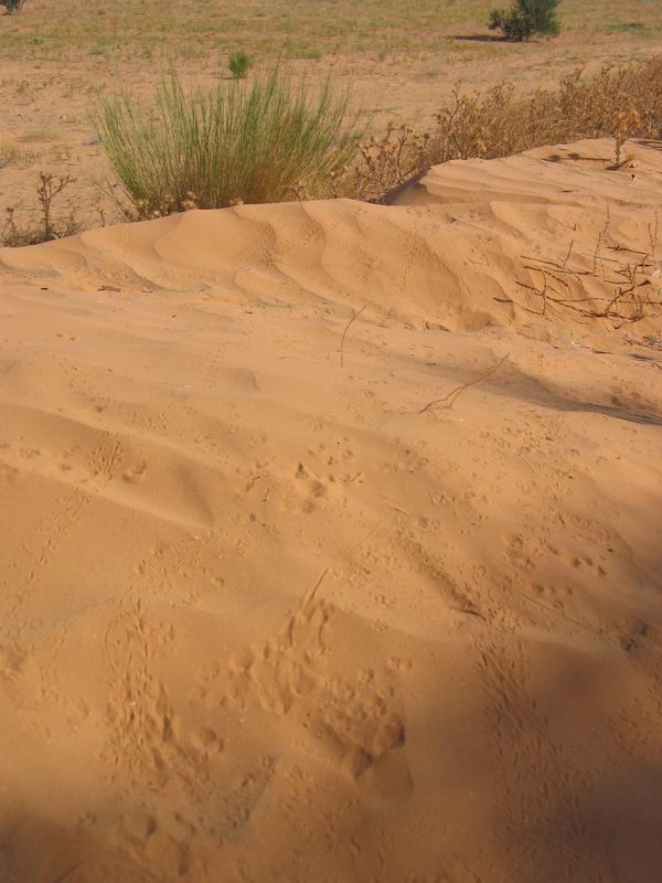 traces-animaux-sable2.jpg